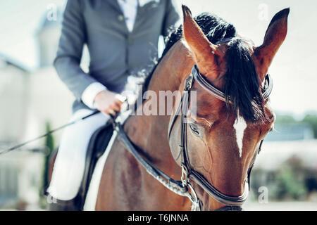 El enfoque selectivo de un hermoso caballo marrón