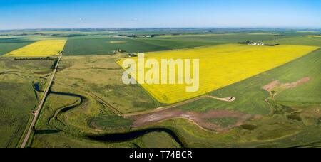Vista aérea de unos florecientes campos de canola, rodeado por verdes campos de cereal y un ventoso Creek en primer plano con el cielo azul Foto de stock