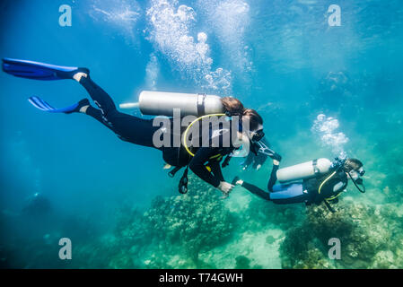 Los buceadores en Roatan Marine Park, Canal azul sitio de buceo; Roatán, Honduras