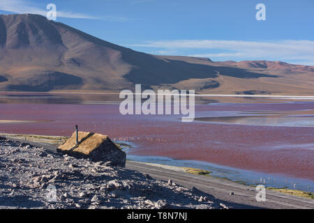 Una extravagancia de James's, andinos y flamencos chilenos en la Laguna Colorada, el Salar de Uyuni, Bolivia