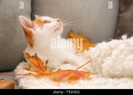 Poco lindo gatito con hojas de otoño en el sofá en casa