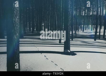 Hermoso bosque de coníferas en invierno. Puro bosque de pinos en tiempo soleado. Se pierden en cuento de invierno. Concepto blanco y negro filtro de fotografía.