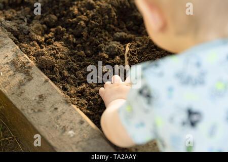 Niño sembrando plántulas de tomate en invernadero. La Jardinería orgánica y concepto de crecimiento