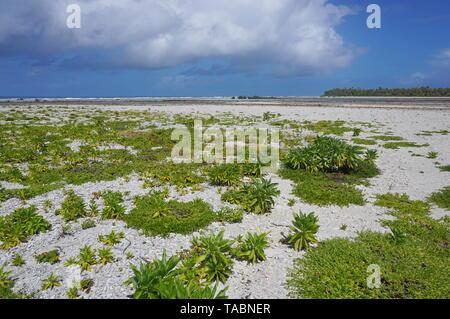Paisaje Tikehau atolón Archipiélago Tuamotu, en la Polinesia francesa, Océano Pacífico