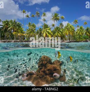 Costa Tropical con las anémonas de mar y peces bajo el agua, Tikehau atoll, Tuamotu, en la Polinesia francesa, Océano Pacífico, vista dividida por encima y por debajo de la superficie del agua