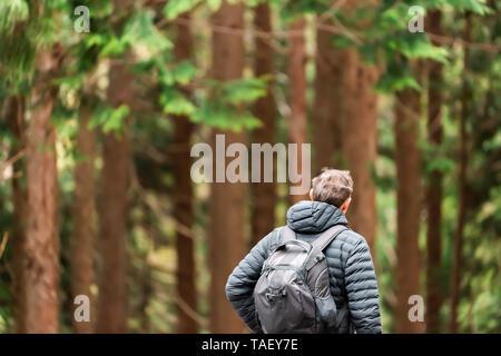Un bosque de pinos a principios de la primavera, en la Prefectura de Gifu, Japón parque cerca de Okuhida aldeas con hombre caminando sobre senderos Foto de stock