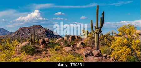 Amplio ángulo de imagen del clásico paisaje del desierto de Arizona en la primavera con cactus y montañas.