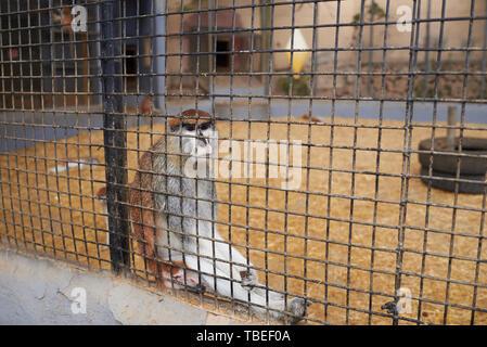 Mono enjaulado en un zoológico