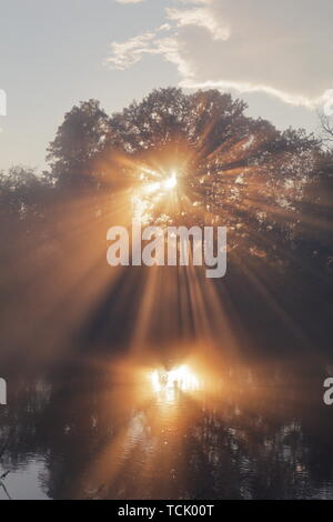 Los rayos de sol naranja que penetra a través de los árboles y lanzando una reflexión sobre el agua. Los colores de los árboles, el cielo y el agua son moderadas para poner énfasis a
