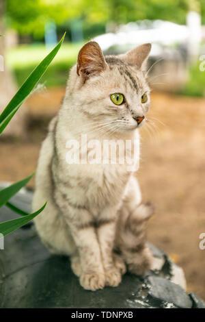 Un gato atigrado gris rayas sentados en el césped