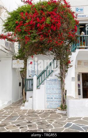 Un gran árbol bougainvillea adorna la entrada del centro de alojamiento en Mykonos en la isla en las Cícladas.