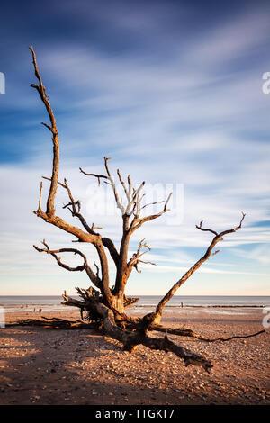La larga exposición imagen de Lone Tree en la playa, en la Bahía Botany, Edisto Island, SC, EE.UU.