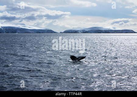 Bajo la sección de ballenas nadando en el mar contra el cielo