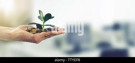 Inversión de dinero el éxito empresarial concepto. mano con monedas y planta espacio de copia.