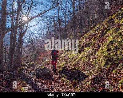 España, Asturias, Cordillera Cantábrica, senior hombre sobre una excursión por el bosque