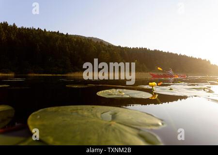 Una feliz mujer atlética en kayak en el atardecer en un lago entre flores de loto
