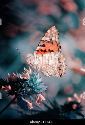 Magia con antecedentes Painted Lady Butterfly. Cerca se centran suave foto de mariposa en un jardín de flores.
