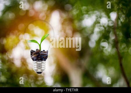 Conceptos sobre el medio ambiente y el crecimiento de los árboles naturales. Pequeña plat o crecer creciendo en la bombilla de luz verde en el fondo de la naturaleza.