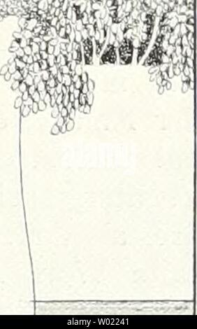 Imagen de archivo de la página 114 de Die Gartenkunst (1899)
