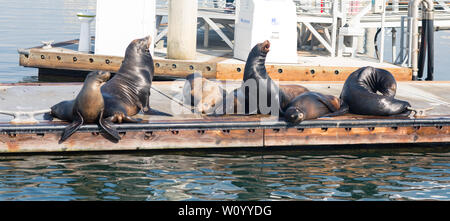 Leones marinos y focas descansando sobre un embarcadero Fisherman Village, Marina del Rey, California