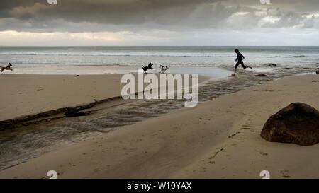 Corriendo con los perros a lo largo de la playa de Glencairn en Sudáfrica es False Bay costa, cerca de Ciudad del Cabo, durante los meses de invierno del país. Foto de stock