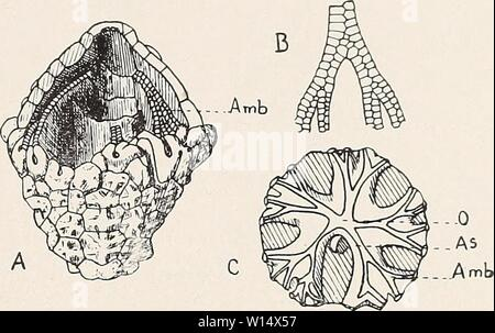 Imagen de archivo de la página 28 del Devoniano Crinoideos de la.