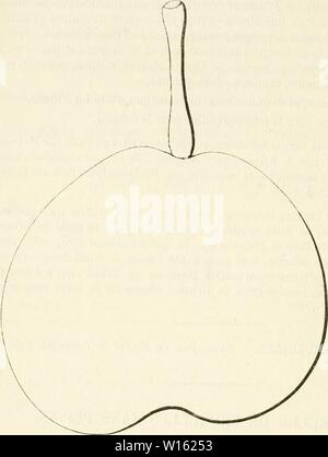 Imagen de archivo de la página 203 del Dictionnaire de pomologie, contenant l'histoire.