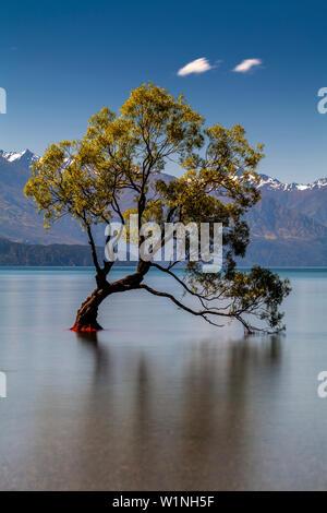 """La icónica """"Lone Tree' en el lago, el Lago Wanaka, la Región de Otago, Isla del Sur, Nueva Zelanda"""