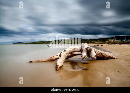 Un árbol muerto en la playa, Kaka Point, los Catlins, Isla del Sur, Nueva Zelanda