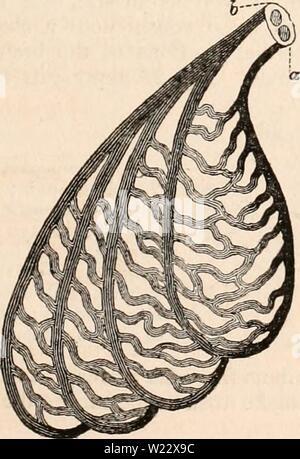 Imagen de archivo de la página 114 de la cyclopaedia de anatomía y