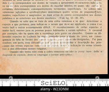 Imagen de archivo de la página 157 de defesa contra o ophidismo. Una defesa contra o ophidismo defesacontraoop00Braz Año: 1911 Foto de stock
