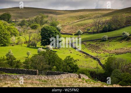 Sedbergh, Cumbria, Reino Unido, y Frostrow Soolbank, tierras bajas separadas por paredes drystone debajo Howgill Fells