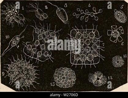 Imagen de archivo de la página 28 de la cyclopaedia de anatomía y