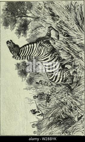 Imagen de archivo de la página 412 de Angola á la contra-costa; descripção. De Angola á la contra-costa; de uma viagem atravez descripção do continente africano deangolacontrac01cape Año: 1886