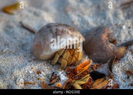 Esta única foto muestra un pequeño cangrejo ermitaño en la arena de una isla de las Maldivas donde la naturaleza todavía está intacta