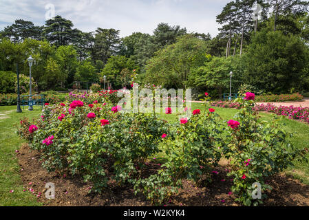 "Rose ""Velásquez"", Parc de la Tête d'or Park de la cabeza dorada, un gran parque urbano, Lyon, Francia."