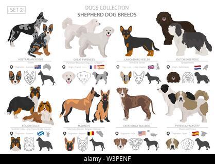 El pastor y los perros pastores colección aislado en blanco. Estilo plano. Color diferente y el país de origen. Ilustración vectorial