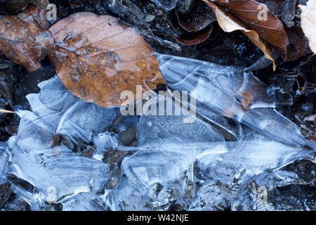 Macro de fondo natural de otoño hojas de hayas incrustado en un charco congelado en Seaton Park, Aberdeen, Escocia, Reino Unido.