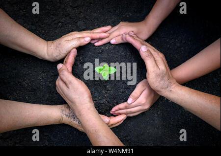 Medio ambiente el día de la tierra en manos de los árboles que crecen las plántulas. Bokeh de fondo verde mano femenina sosteniendo árbol sobre la naturaleza del bosque de hierba del campo conservati