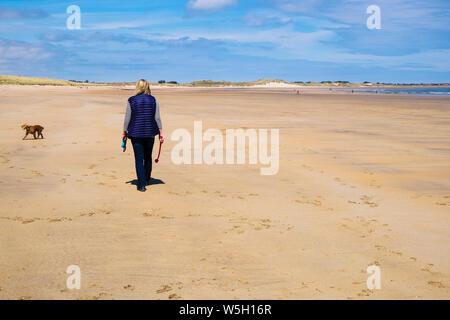 Ejercer una Mujer paseando a un perro Cocker Spaniel en una tranquila playa de arena en la costa noreste. Beadnell, Northumberland, Inglaterra, Reino Unido, Gran Bretaña