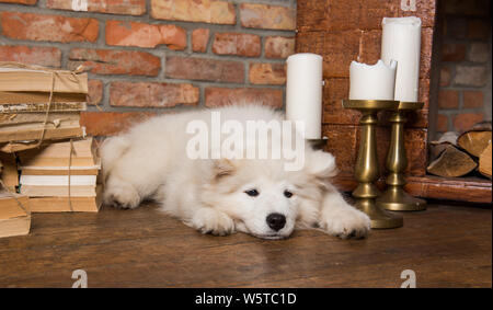 Blanco esponjoso cachorro samoyedo con el libro