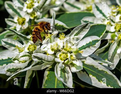 Hermosas flores con bee close-up en el día de verano. Hermosas flores con bee close-up en el día de verano.