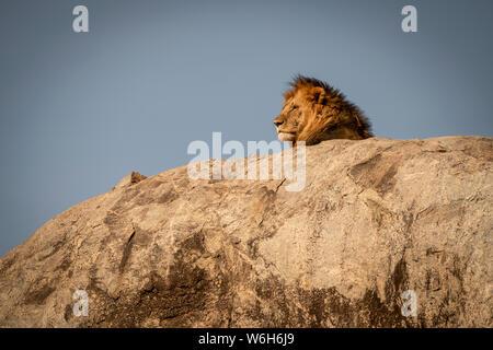 Cabeza de león macho (Panthera leo) tumbado sobre kopje, Parque Nacional del Serengeti, Tanzania