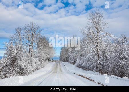 Country Road en invierno con árboles cubiertos de nieve; Thunder Bay, Ontario, Canadá