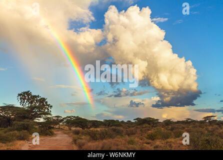 Arco iris en color azul cielo nublado por camino de tierra safari en la Reserva Nacional de Samburu, Kenia, África Oriental. Safari drive en African Travel desti
