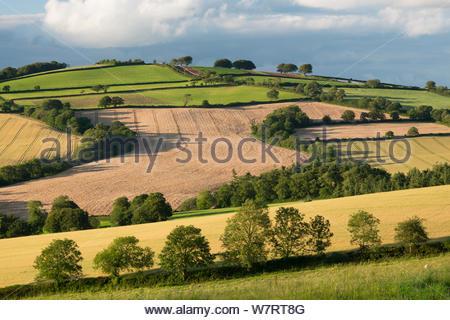 La campiña en verano, Nr Crediton, Devon, Inglaterra. De julio de 2012. Foto de stock
