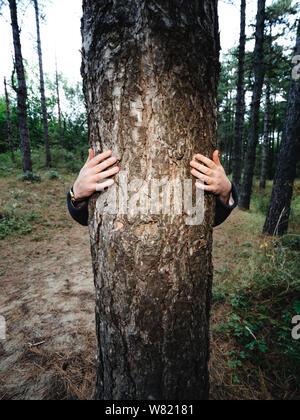 Mujer abraza tall tree vino con las manos en el Bloemendaal bosque cerca de la playa.