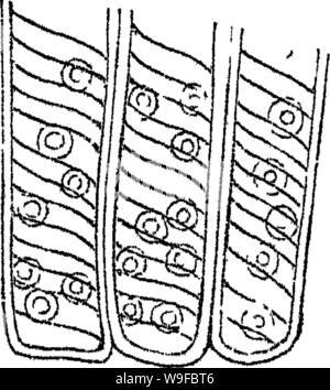 Imagen de archivo de la página 28 de los principios de la anatomía y la
