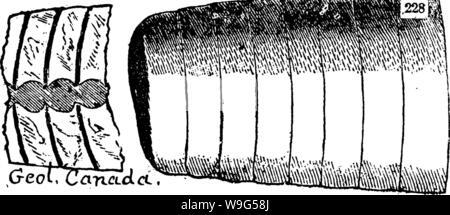 Imagen de archivo de la página 114 de un diccionario de los fósiles.