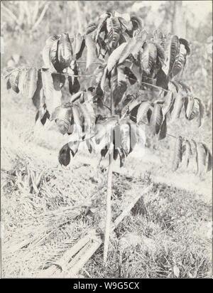 Imagen de archivo de la página 114 de la cultura de la Central